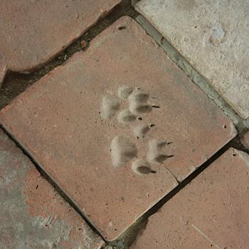 Afdrukken in een tegel van 'duivelspoten' die echter van hondenpoten zouden zijn