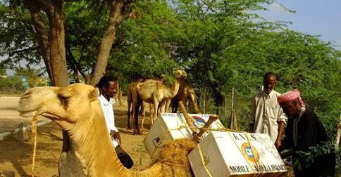 Verspreiding van boeken met kamelen op het platteland in Kenya