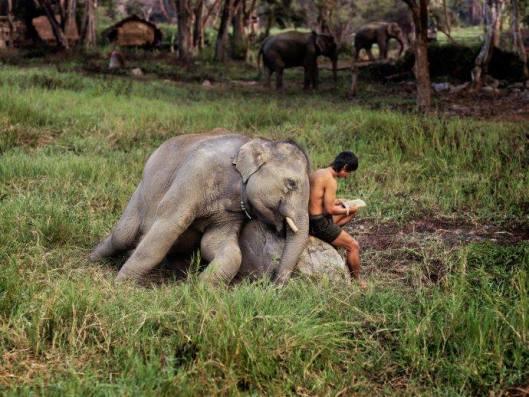 Lezend tegen een olifant in Thailand