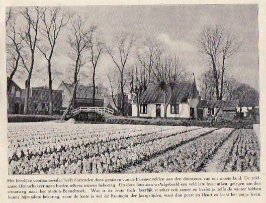 Bloembollenvelden nabij de Bennebroekerlaan. Uit: het Schouwvenster, 1926