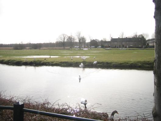 Het landje van Höcker aan de Höckervaart met veel gansen en eenden