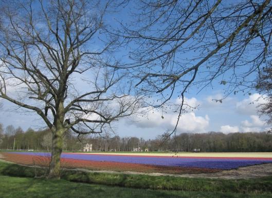 Kadijk met bloembollenvelden in bloei en zicht op Huis te Manpad