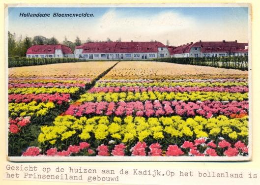 Zicht op Kadijk, met bloembollenvelden, zich waar nu woningbouw van Prinseneiland bevindt.