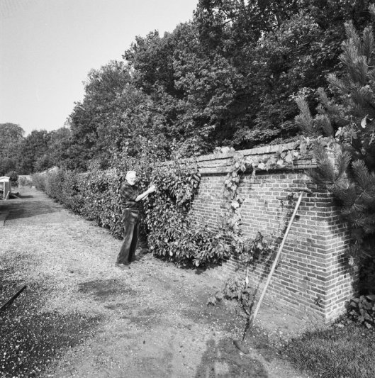 Fruitmuur ofwel slangenmuur op landgoed Berkenrode (1995)