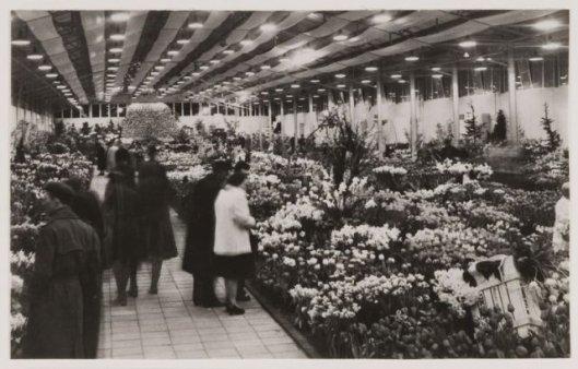 Bloemenhal, FLORA 1953 Heemstede