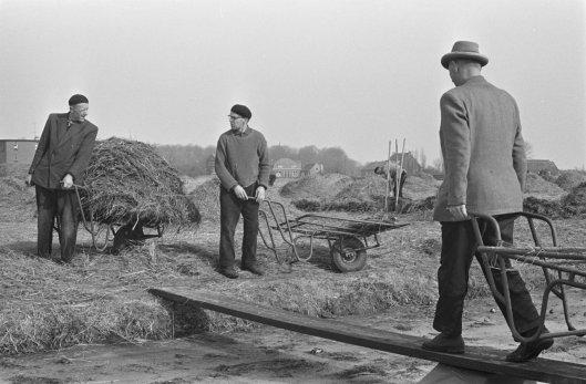 Bollenkwekers aan het afdekken in bloembollenveld bij Bennebroek, 8 maart 1963 (Nationaal Archief)