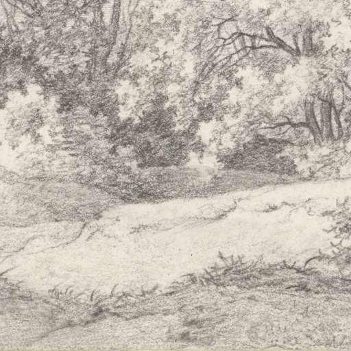 Pieter van Cranenburgh, bos aan de duinrand bij de Hartekamp. 1816 (Rijksmuseum Amsterdam)