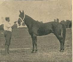 A.H.van Wickevoort Crommelin met zijn paard 'Contoleur' in 1903