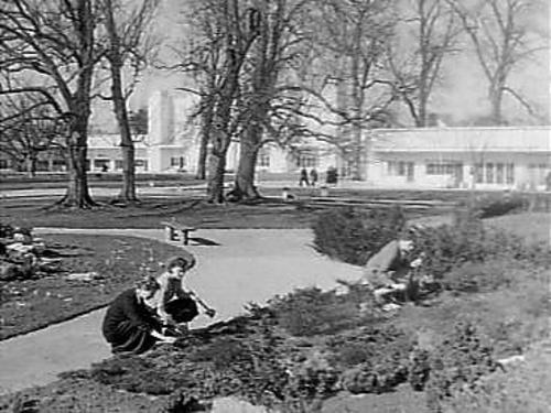 Flora 1953: aanleg met tentoonstellingsbouw op de achtergrond