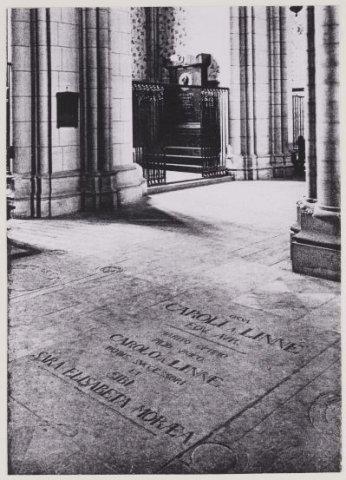 Gtaf van Linnaeus in de Domkerk te Uppsala, Zweden