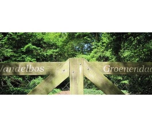 Hek wandelbos Groenerndaal (foto IVB-Zuid-Kennemerland)