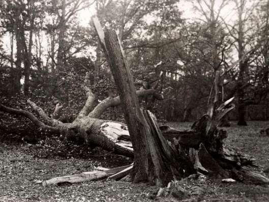 Tijdens een novemberstorm in 1921 knapten verscheidene bomen in Groenendaal
