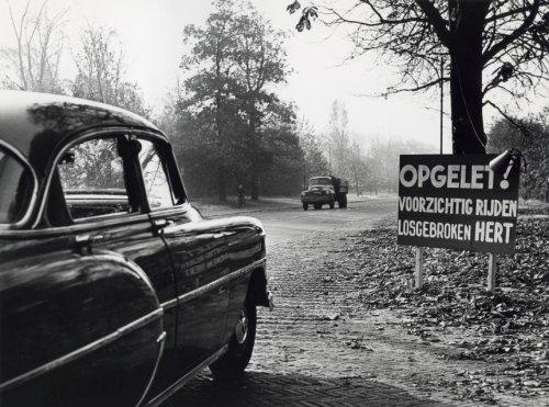 Nadat uit het hertenkamp Groenendaal een hert was ontsnapt zijn waarschuwingsborden geplaats aan de Herenweg (2-11-1955)
