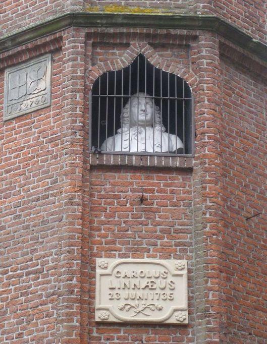 Borstbeeld van Linnaeus, in 1869 vervaardigd door Petrus Cornelius de Preter, in torentje Academiestraat, Harderwijk (Willian Kroeze)