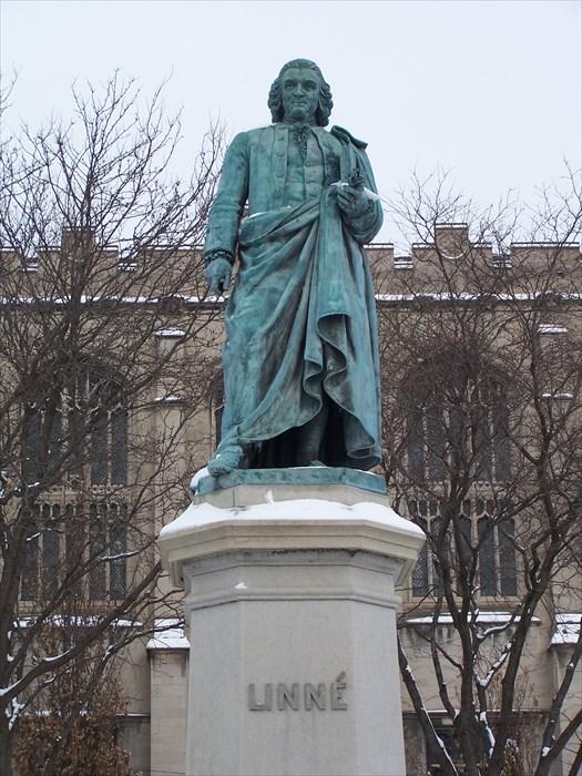 Linnaeus4