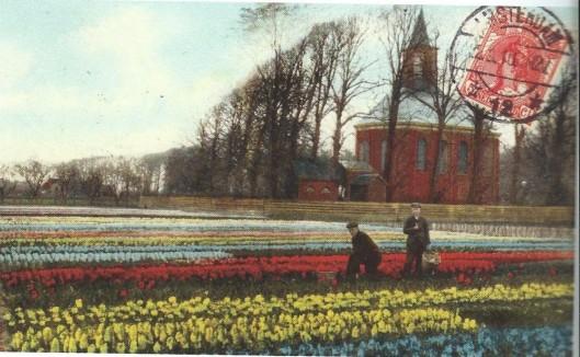 Bloeiende hyacinthenvelden nabij de Hervormde Kerk van Bennebroek in 1910. destijds eigendom van Dirk Bakker. Rechts staat meesterknecht Eef Arxhoek en links van hem één van de losse krachten.