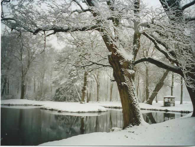 Ipenrode in wintertooi. Foto van familie Van den Bos, eind 2000