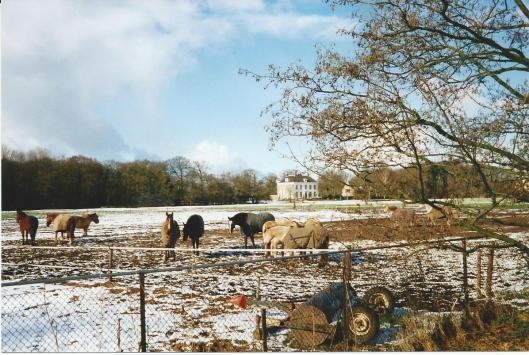 Paarden op het landgoed Ipenrode