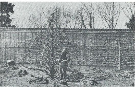 Nog een foto van Cornelis de Wilde van Huis te Manpad bij zijn 'gevleugelde piramide' nabij de slangenmuur. Foto uit 1899