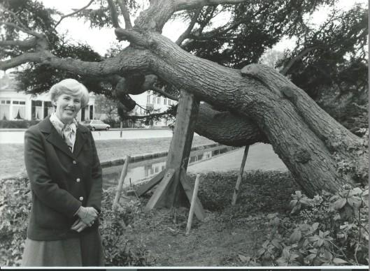 Mevrouw Wiesenhaan bij de omgewaaide ceder voor huize de Ceder aan de Bronsteeweg in Heemstede