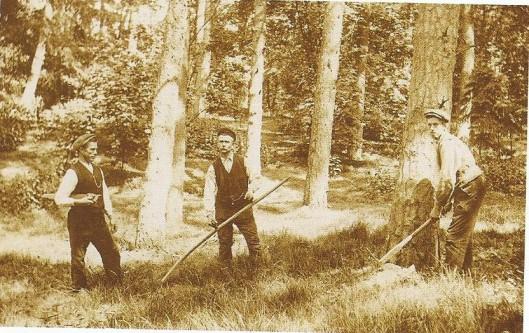 Boswerkers bezig met het onderhoud van Groenendaal