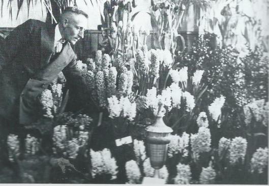 Winnaar van de wisselbeker op de Flora-tentoonstelling van 1925 was de heer P. van der Linden, op deze foto temidden van ingezonden hyacinthen.