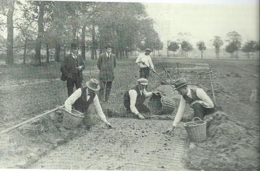 Al lang voor de Flora van 1925 in Groenendaal zijn talloze bollen gepoot, zoals op deze foto de bollen van de firma Tubergen, die alom succes hebben geoogst.