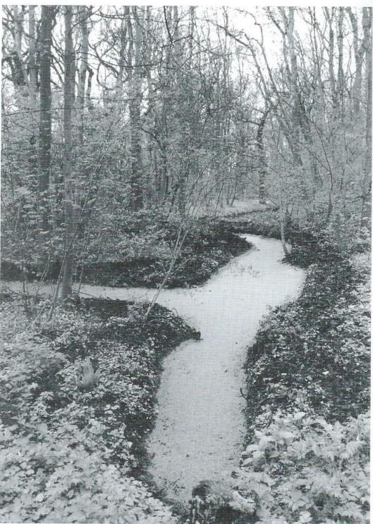 Vroeg-landschappelijk mini-vijvertje op Ipenrode