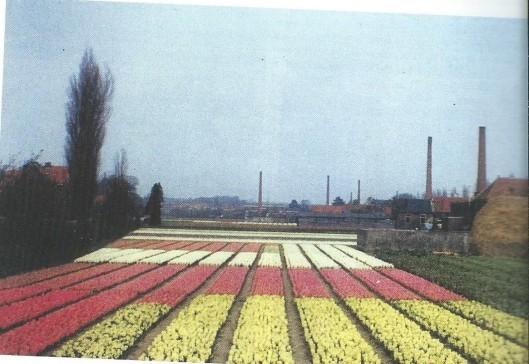 Bollenvelden tussen de Blekervaartweg en Burgemeester van Lennepweg in de periode 1961-1971