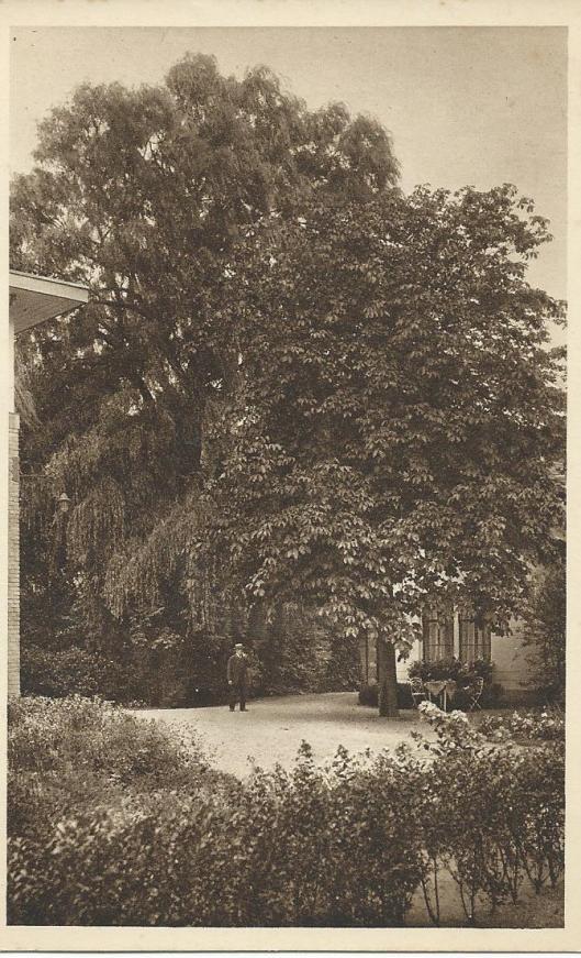 'Wilgenweelde' in tuin van Diaconessenhuis Haarlem