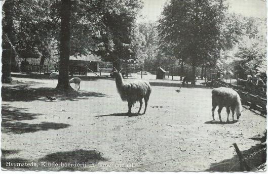 Lama's in de kinderboerderij 't Molentje van Groenendaal Heemstede