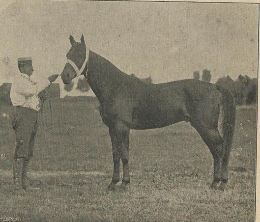 Eigenaar en 'contoleur' A.H.van Wickevoort Crommelin op de renbaan van Woestduin. Uit: Zondagsblad Opr. Haarl. Courant, 30 maart 1903.