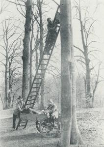Het plaatsen van nestkastjes in Groenendaal (foto Jan P.Strijbos, die over de flora en fauna schreef)