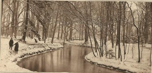 Sneeuwzondag 15 januari 1922. Een natuuropname in het Groenendaalse Bos te Heemstede (K.I.)