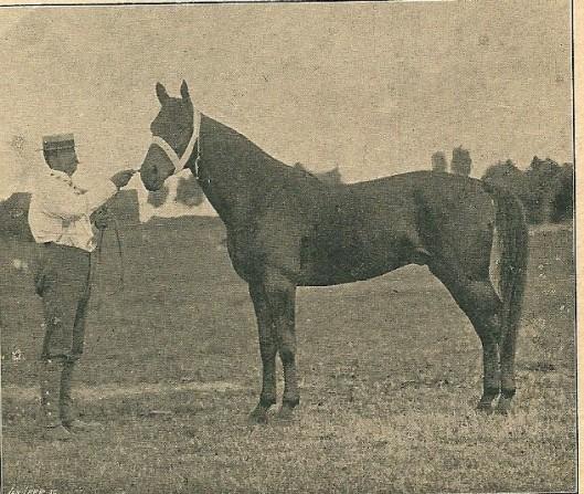 A.H.van Wickevoort Crommelin (1864-1912) met zijn paard 'Controleur' (Zobdagsblad Opr.Haarl. Courant en stadsedtie O.H.C., 30 maart 1903.