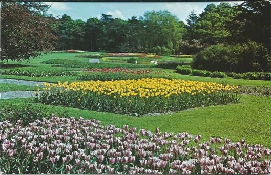 De Linnaeushof als bloemenpark ten tijde van de familie Roozen