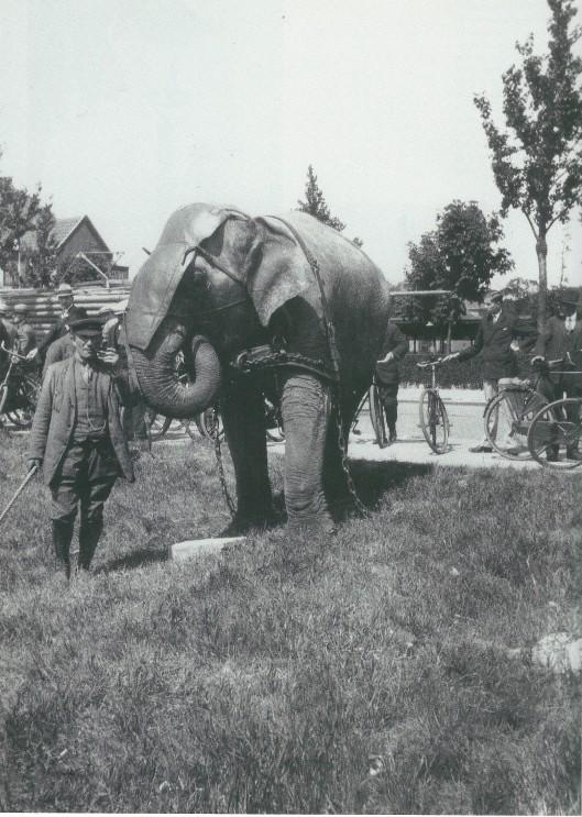 Een reizend circus strijkt zich neer op een weiland bij Groenendaal. Hier poseert een dompteur met zijn olifant. Foto van Leonard Baruch (1905-1978)