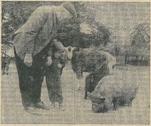 Maarten van Iperen nam na 40 jaar in dienst te zijn geweest bij de gemeentelijke Plantsoenendienst op 15 juni 1971 afscheid. Op deze krantenfoto neemt hij met een kleinkind afscheid van de levende have in de kiderboerderij.