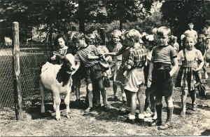 In 1956 verzonden kaart van kinderboerderij Groenendaal