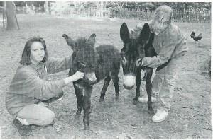 Twee vrijwillige medewerksters van de kinderboerderij poseren in 1994 met ezelin Jolley en rechts haar uit de kluiten gewassen zoon Quiermo, een Spaanse boreling, vernoemd naar gemeentesecretaris Willem van den Berg. (foto Henk van den Ende)