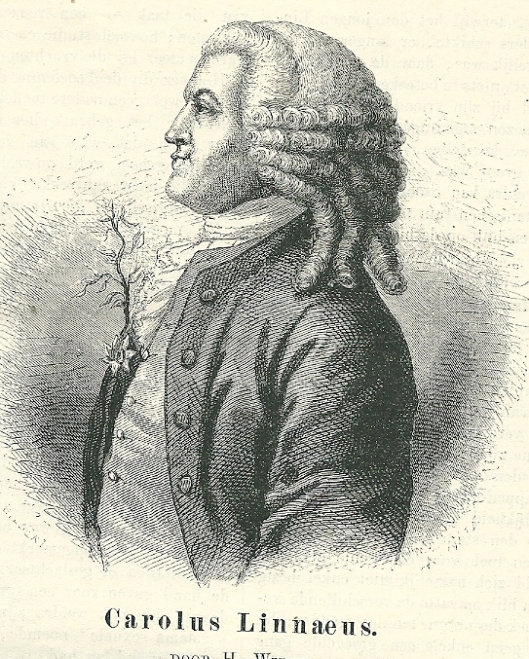 Carolus Linnaeus. Portret als houtgravure uit Eigen Haard, 1878