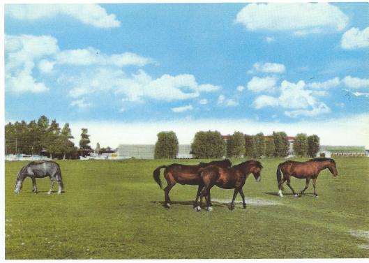 Paarden op de vroegere weilanden van Van Schie, waar nu de woonwijk Merlenhoven is gelegen.