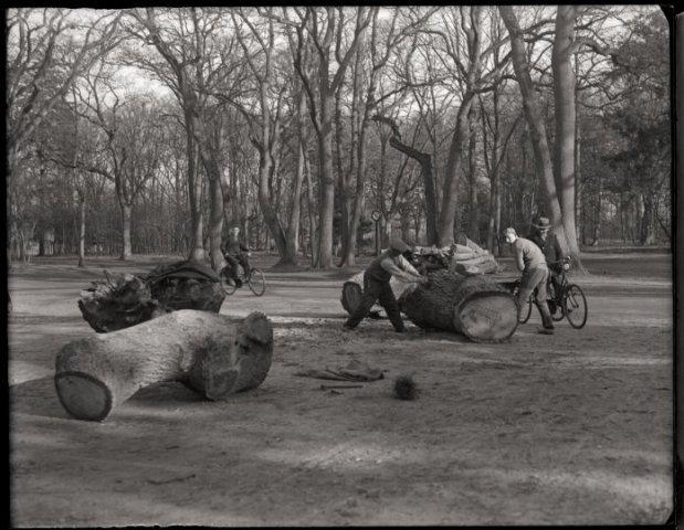 Verzagen van een omgehakte boom in Groenendaal, 18-2-1935
