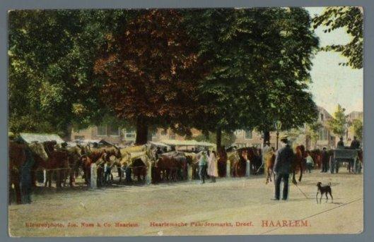 Ansichtkaart van een paardenmarkt begin 1900 op de Dreef in Haarlem