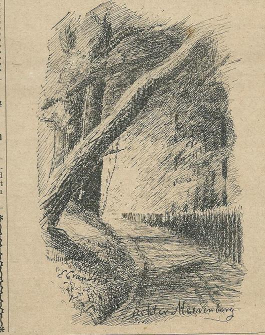 """Ten dele omgewaaide bomen achter Meer en Berg (Uit""""Zondagsblad Opr.Haarl. Courant, 21 december 1903)."""