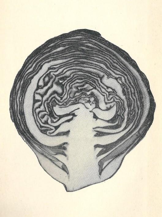 Frontispice van 'Ik ga m'n eige baan', 1958.