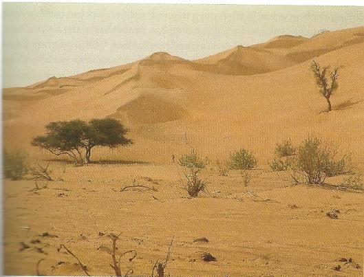 De barre woestijntocht eindigde met exceptioneel hoge zandduinen (foto uit boek)