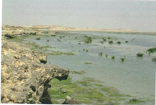 Afbeelding uit het boek van de rotsige kust bij Oman