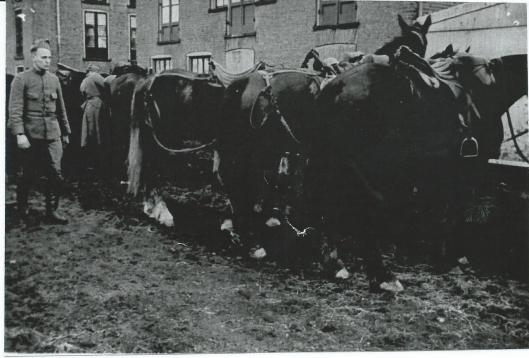 Paarden bij een van de bollenschuren in Heemstede. Locaties van Nederlandse troepen mochten in de mobilisatietijd niet worden genoemd.
