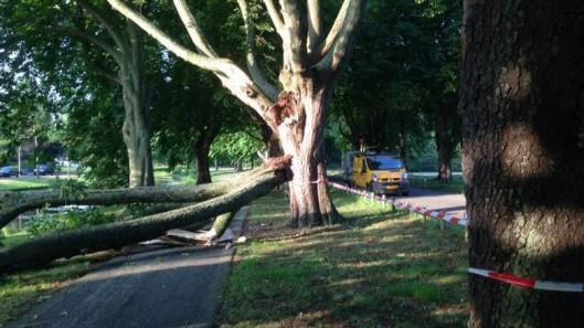 Bij een hevige storm in juli 2015 afgebroken tak van kastanjeboom aan de Vrijheidsdreef. Vanwege de vastgestelde kastanjeziekte heeft de gemeente besloten de circa 80 bomen in 2 termijnen (2015 en 2016) te kappen en te vervangen door nieuwe bomen.